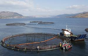 scotish salmon farm